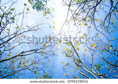 Autumn beech trees crowns. Beautiful seasonal nature photography.