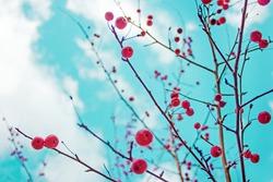 Autumn berries against a blue sky/autumn nature background
