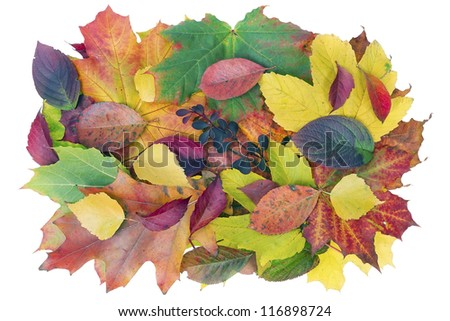 Autumn billboard banner from red yellow leaves isolated concept