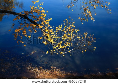 autumn birch branch on the blue lake background,by the light of local