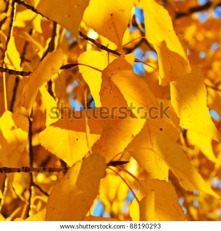 Autumn birch branch on the blue sky background