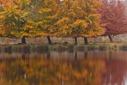 Autumn birch trees in a colorful landscape with water