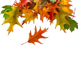 Autumn border card of colored falling leafs isolated on white background