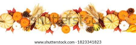 Autumn border of assorted pumpkins, gourds, leaves and corn. Top view isolated on a white background. Foto stock ©