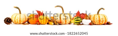 Autumn border of assorted pumpkins, gourds, nuts and leaves. Side view isolated on a white background.
