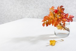 Autumn bouquet of colorful rosehip leaves in glass vase in sunbeams on white wood table, copy space.