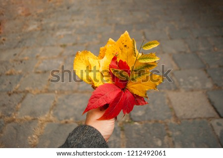 Autumn bouquet of red, yellow and green leaves in a young lady's hands. #1212492061