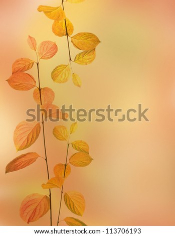 autumn branches and leaves border on orange background