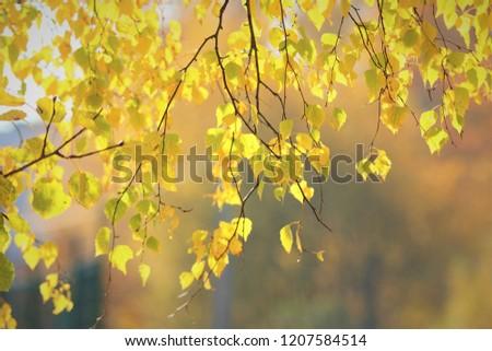 autumn bright leaves #1207584514