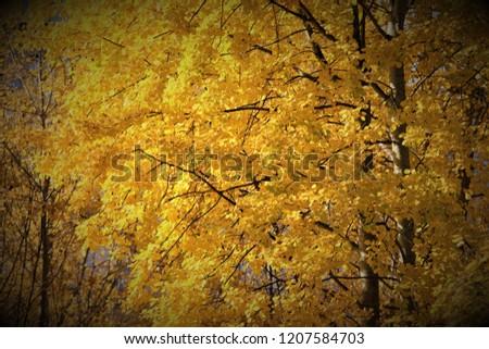 autumn bright leaves #1207584703