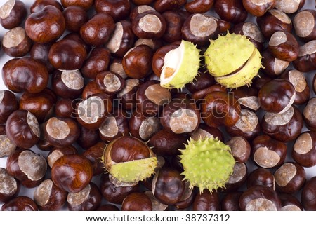 Autumn brown glossy conkers of horse-chestnut tree, fruits with green spiky open capsule, seasonal seeds of Aesculus hippocastanum tree, objects lying in horizontal orientation, nobody.