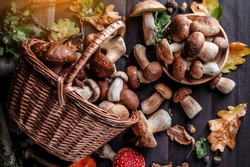 Autumn Cep Mushrooms. Basket with porcini mushrooms on the background of a tree. Close -up on wood rustic table. Cooking delicious organic mushroom.