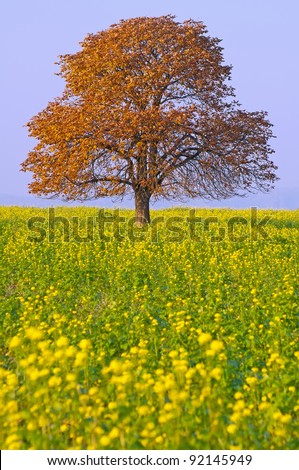 Autumn chestnut tree on a field during the sunny day.