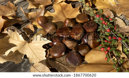 Autumn chestnuts with dry leaves and red forest berries, natural light on wooden background Stock fotó ©