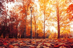 Autumn city landscape. Autumn trees in sunny autumn park lit by sunshine and fallen maple leaves on the foreground
