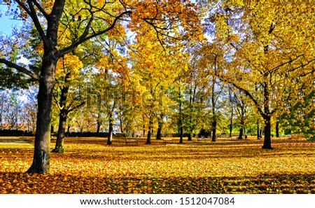 Autumn city park landscape. Golden autumn city park. Autumn city park. Autumn city park view