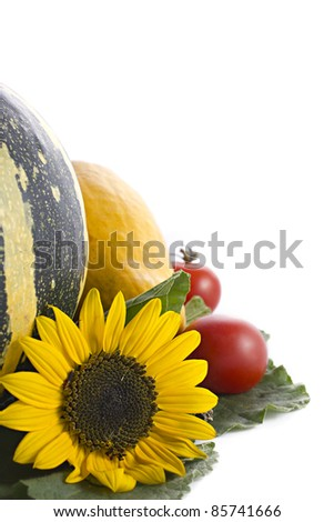 Autumn collection with pumpkin, herbs, sunflowers and hay