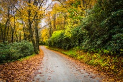 Autumn color along a dirt road near the Blue Ridge Parkway in Moses H. Cone Park, North  Carolina.