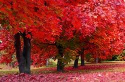 Autumn colored trees