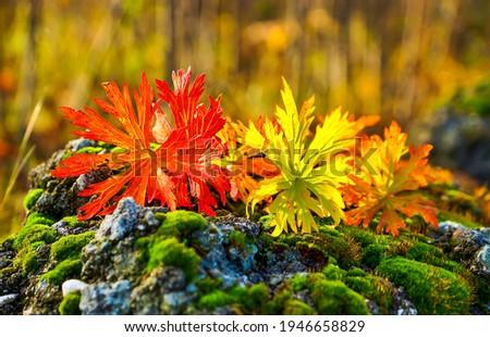 Autumn colorful nature macro scene. Colorful autumn. Autumn nature scene