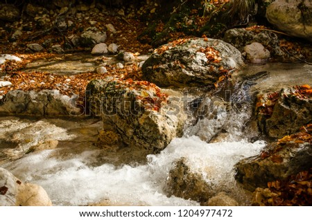 Autumn colors.  A torrent flows impetuously between rocks covered with autumn leaves of various colors. #1204977472
