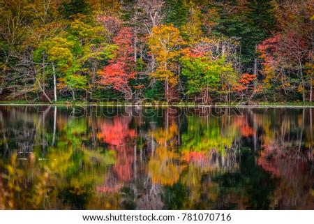 Autumn colors at a lake in Shireteko Five lakes park, Hokkaido, Japan #781070716