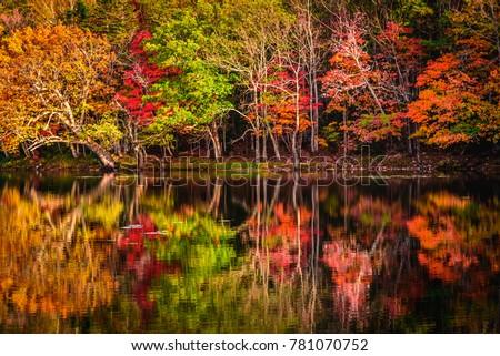 Autumn colors at a lake in Shireteko Five lakes park, Hokkaido, Japan #781070752