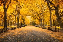 Autumn colors at Central Park in New York City, USA