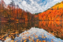 Autumn colors. Colorful fallen leaves in the lake. Magnificent landscape. Natonial Park. Yedigoller. Bolu, Istanbul, Turkey.