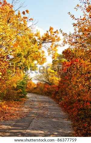 Autumn colors country road