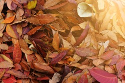 Autumn colors. Fallen leaves of trees, with sunlight.
