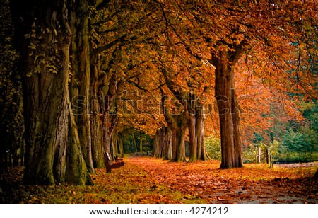 autumn colors in the forest