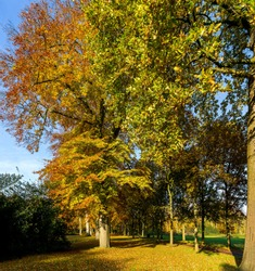 Autumn colors in the Steenvoorde park in Rijswijk/The Hague