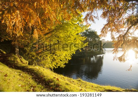 Autumn colors, looking through the backlit trees and across lake.