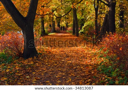 Autumn colors of old park