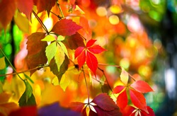 Autumn colors. Orange colouring of beauty fall landscape in park