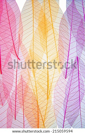 Autumn colors transparent - Shutterstock ID 215059594
