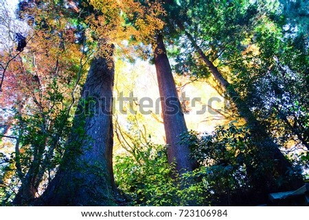 autumn colour of leaves - Shutterstock ID 723106984