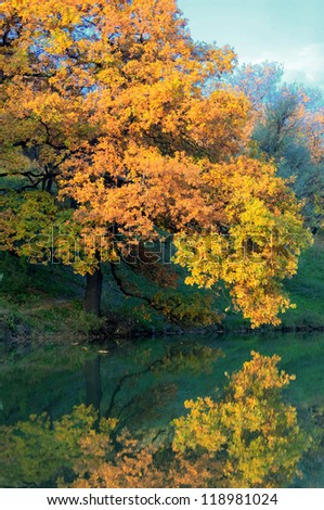 Autumn coloured trees with reflection in water