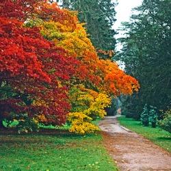 Autumn colours in a woodland garden