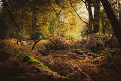 Autumn Colours In The New Forest