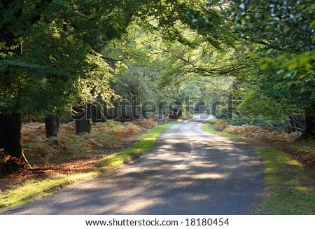 Autumn colours, New Forest national park, Hamshire - stock photo