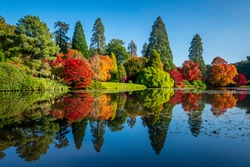 Autumn colours on the trees reflected in a lake in Sheffield Park Gardens, a National Trust property in Sussex, UK.