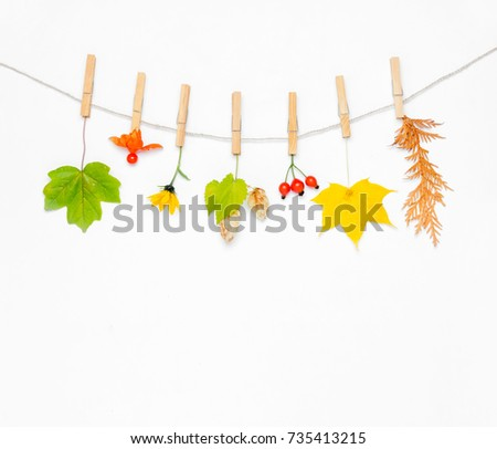Autumn composition. Autumn flower, maple leaves and berries rose hips, hops cones, physalis on white background. Flat lay, top view, copy space #735413215
