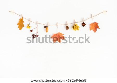 autumn composition. autumn...