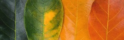 Autumn composition background, colorful leaves in a row.