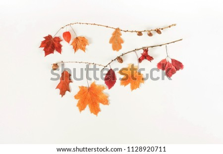 Autumn composition background. Frame pattern made of autumn tree leaves, cones, acorns, on white background. Top view. Copy space. Flat lay #1128920711