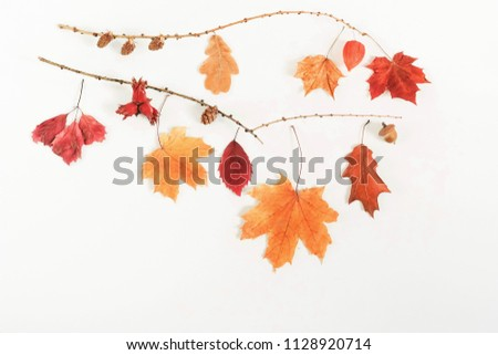 Autumn composition background. Frame pattern made of autumn tree leaves, cones, acorns, on white background. Top view. Copy space. Flat lay #1128920714