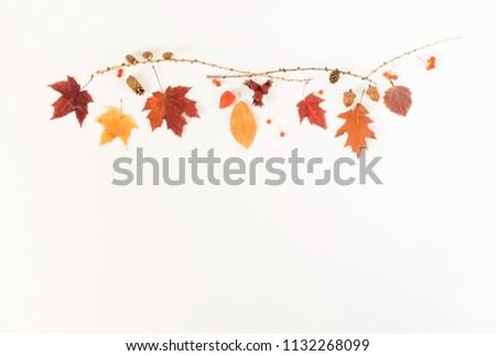 Autumn composition background. Pattern made of autumn tree leaves on white background. Top view.  Flat lay. Copy space #1132268099