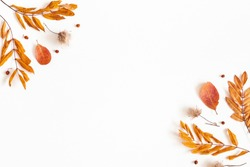 Autumn composition. Dried leaves, rowan berries on white background. Autumn, fall, thanksgiving day concept. Flat lay, top view, copy space